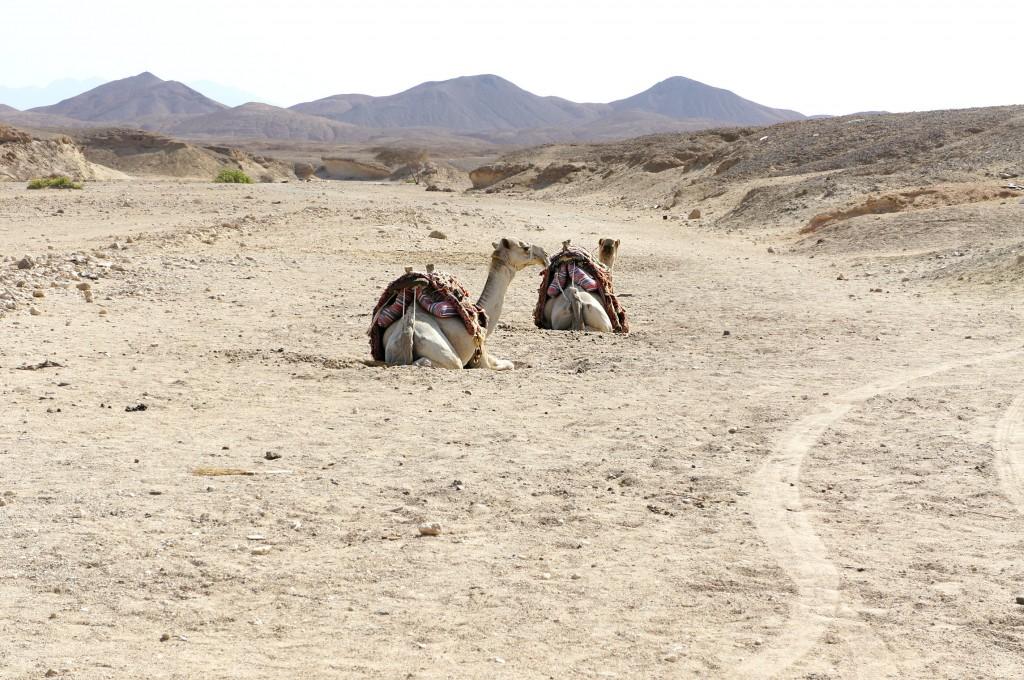 deserto marsa alam